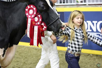 Royal Holstein Senior Cows 2018