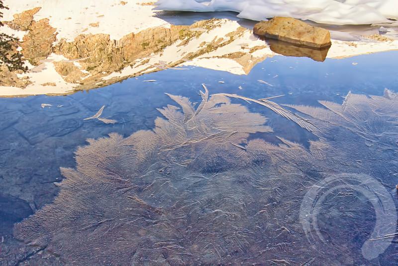 Ice Feathers.jpg