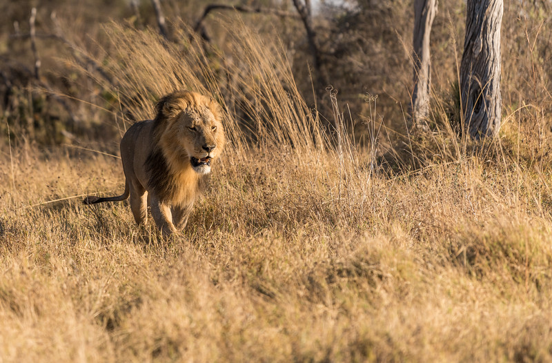 Botswana_June_2017 (3920 of 6179).jpg
