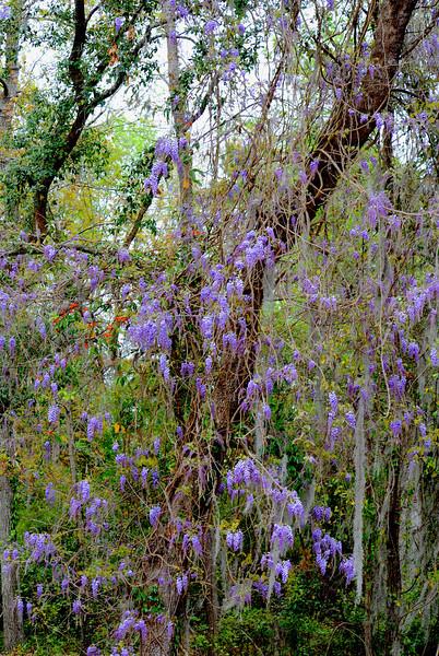 River Ridge 2009 Spring