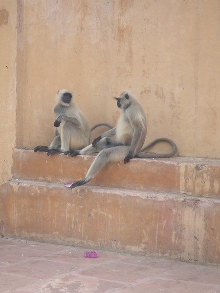 "So cool seeing ""wild"" monkeys"