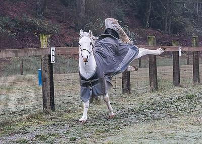 Anne's Ponies