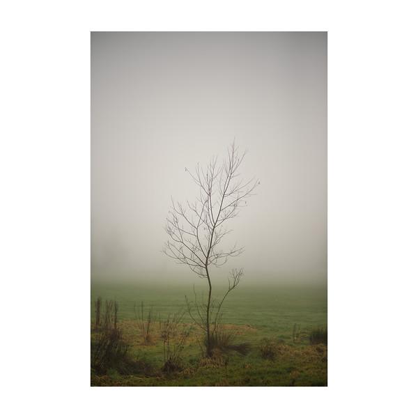 48_365_FoggyTree_10x10in.jpg