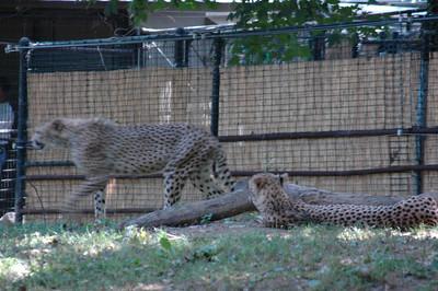 National Zoo - September 2006