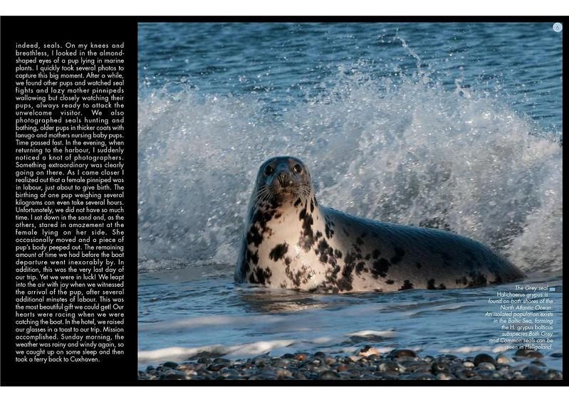 ANIMA MUNDI Issue 19 - 144ppi-page-003.jpg