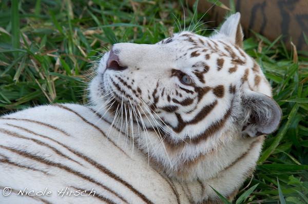 Animal Conservation Reserve Guatemala 03-2012
