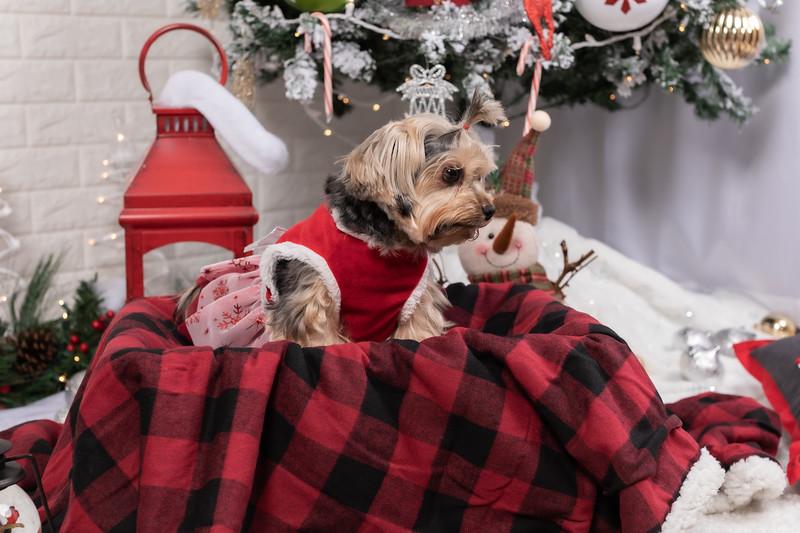 12.10.19 - Leide e Mel's (Mel Pet) Studio Christmas 2019 - -39.jpg