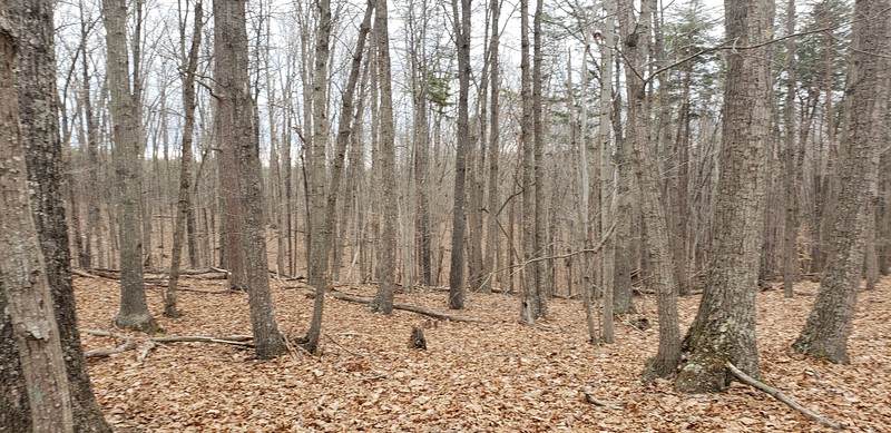 Tract 4 - mostly beautiful hardwood forest