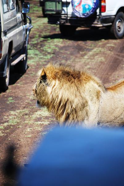 Ngorongoro (104).JPG