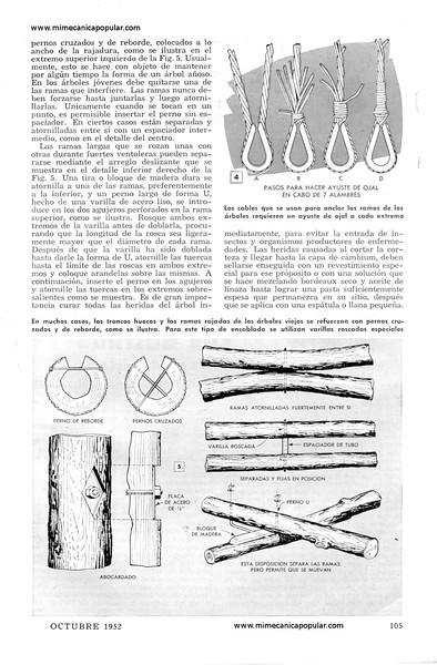 metodos_para_proteger_arboles_viejos_octubre_1952-03g.jpg