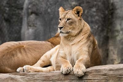 Steve- NC zoo