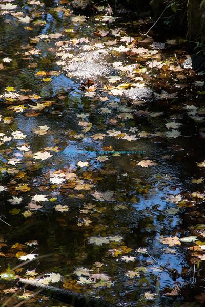 2014 09 17_4120_edited-1.jpg