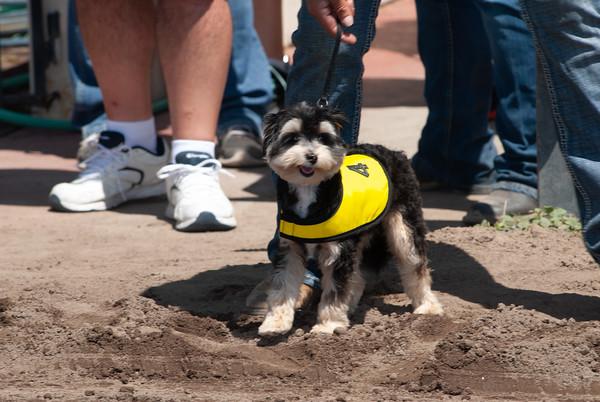Derby Dog Dash 8-11-19