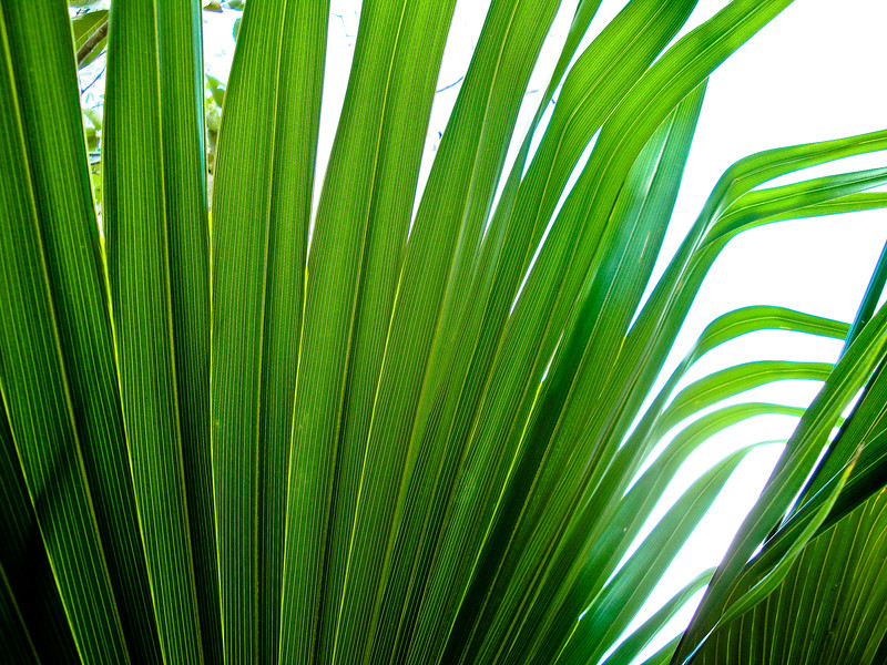 palm-outside-the-tulum-ruins_4499582391_o.jpg