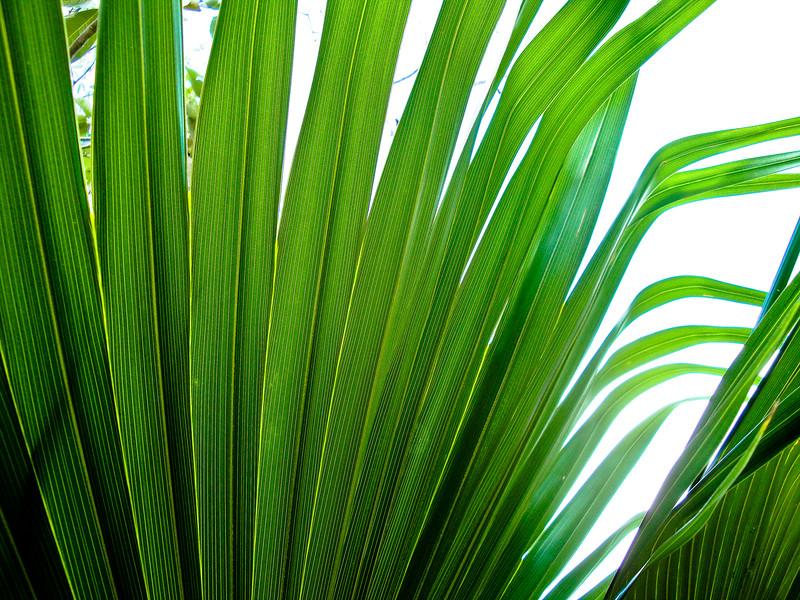 palm-outside-the-tulum-ruins_4499582391_o.jpg