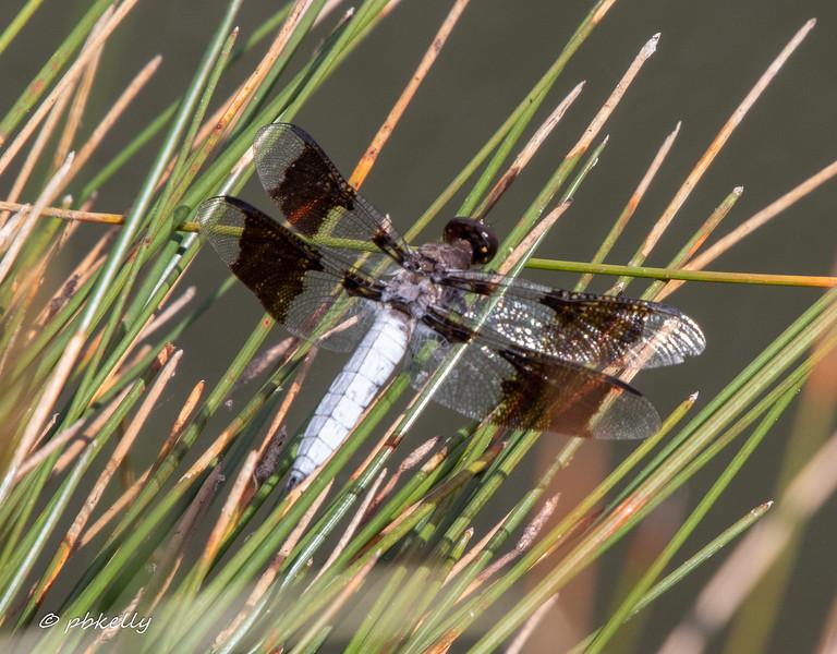 whitetail 090419-1.jpg