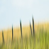 Abstract photo of prairie fences near Claresholm, Alberta, Canada.