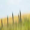 abstract_prairie-1-1