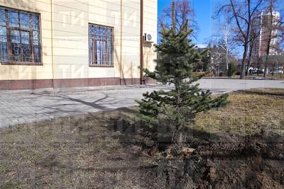 25.04.2018  Посадка деревьев в честь татарских звезд (Салават Камалетдинов)