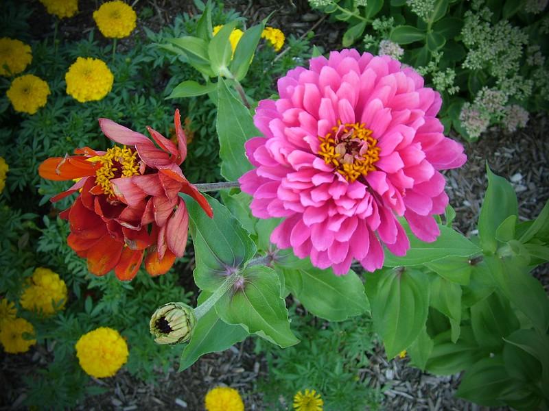 Flowers 095.jpg