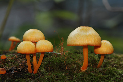 Mushrooms, Lichens & Slime Molds
