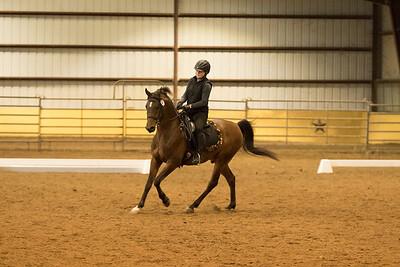 Horse 641