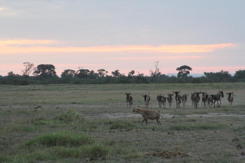 Kenya 2019 #2 1824.JPG