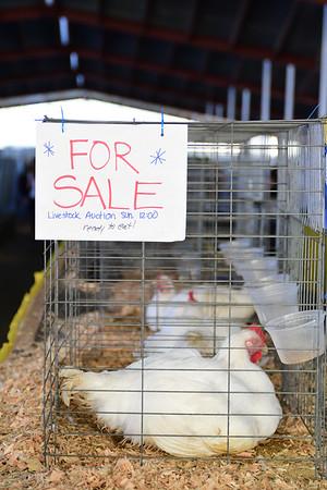 King County Junior Livestock Auction