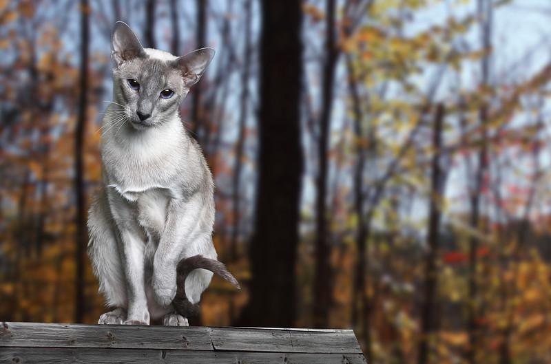 Saule-cat-9.jpg