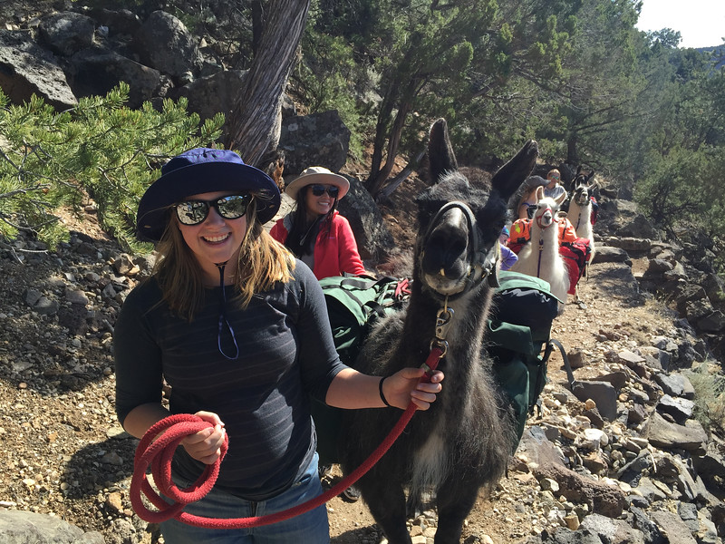 woman leading a llama pack on a walking trail