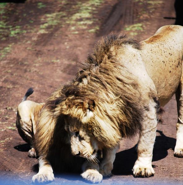 Ngorongoro (139).JPG