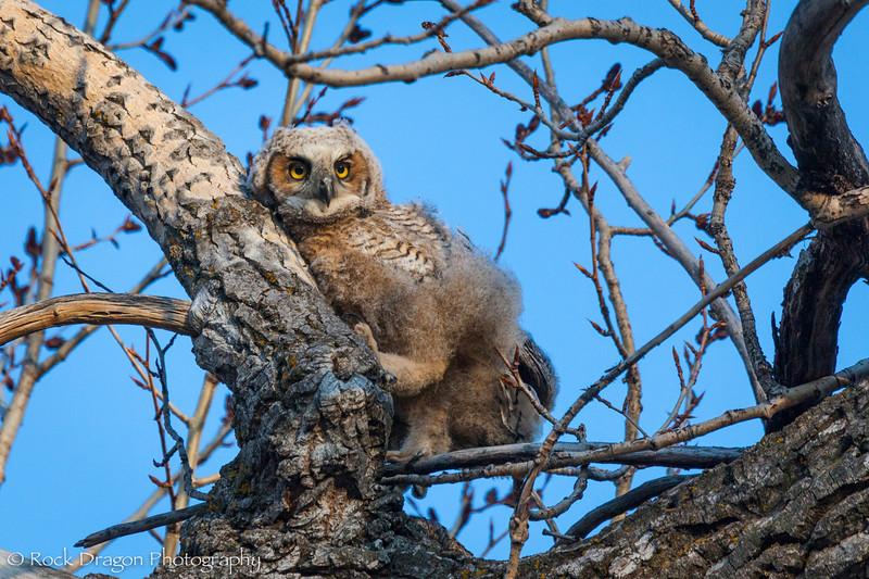 Owl-9.jpg