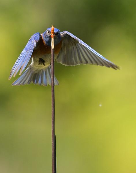 Robin-23.jpg
