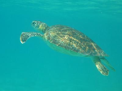 Tobago Cays Snorkelling