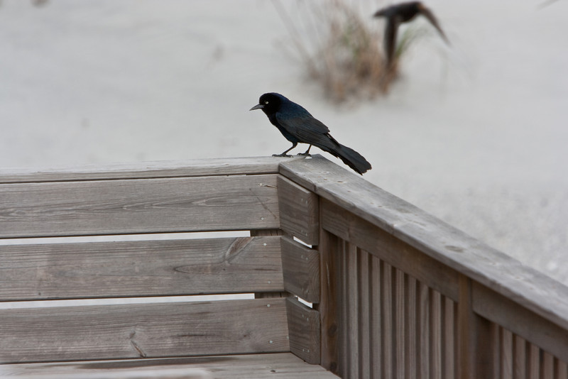 Crow (?) on the deck.