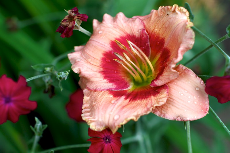 July 1, 2012
