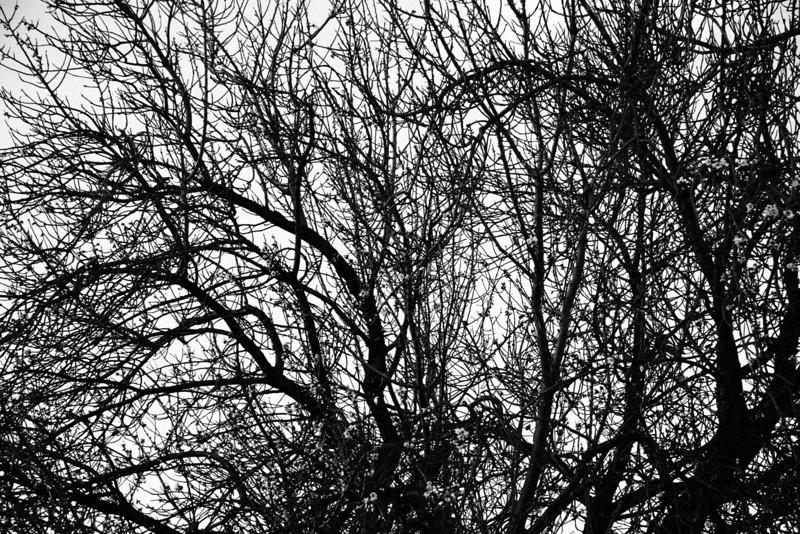 _MG_1388 - winter trees workingbw.jpg
