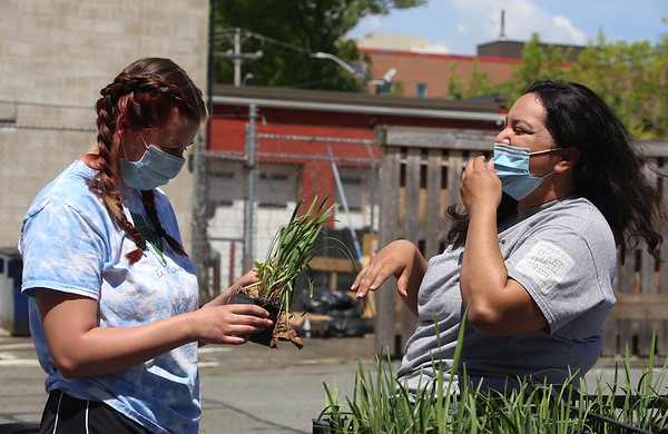 Mill City Grows plant sale 051521