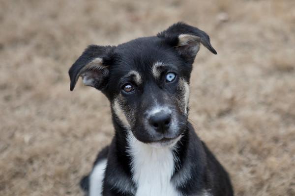 Jackie's Pups 1-27-18