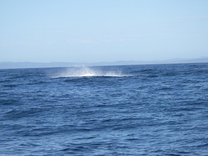 Sydney trip and Mirimbula 064.JPG