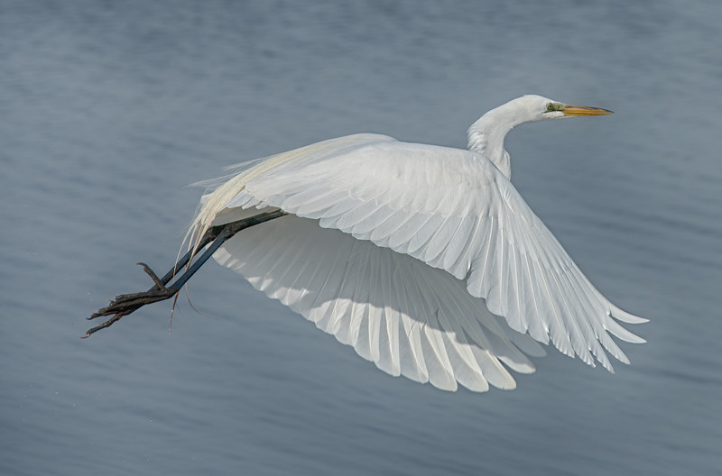 Egret-cropped_DSC2655.jpg