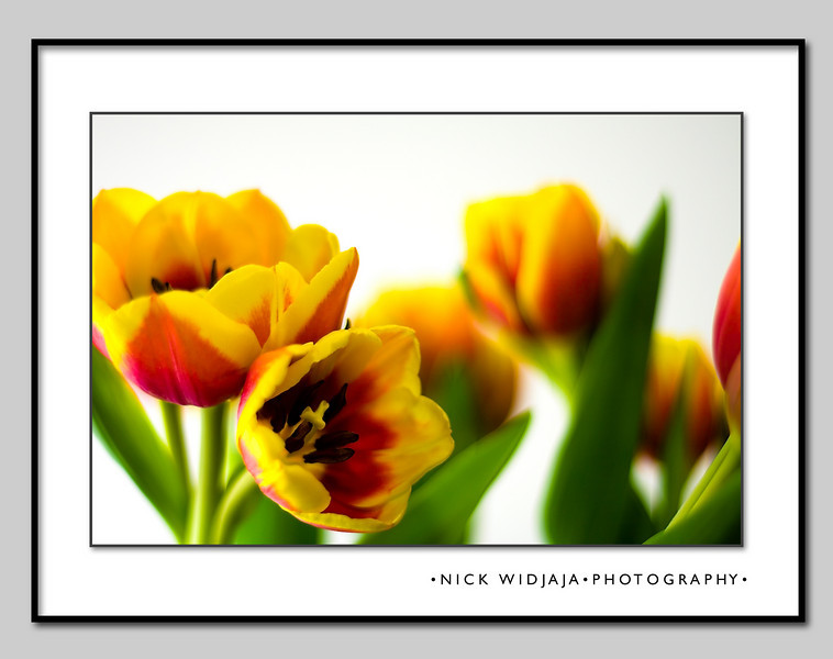 Tulip Light Box - ptflio_02.jpg