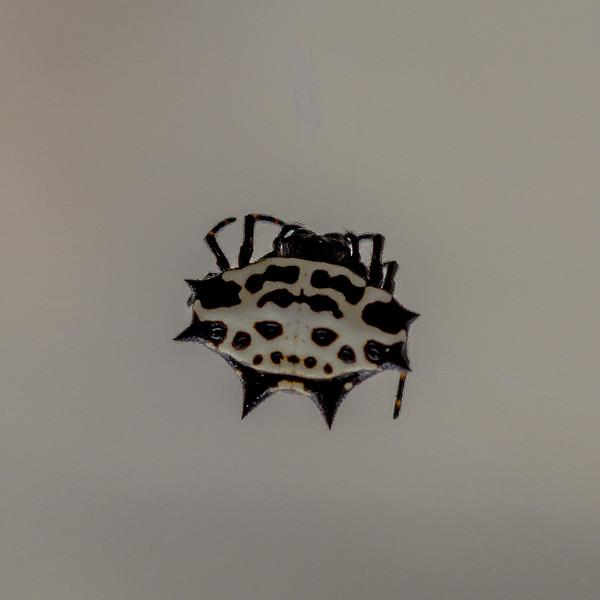 aus-oct-spider-10-23-2016-6.jpg
