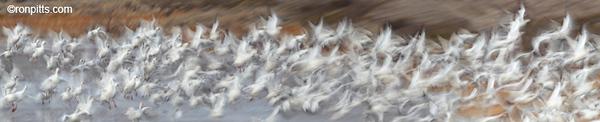 Snow Flurry (long version)