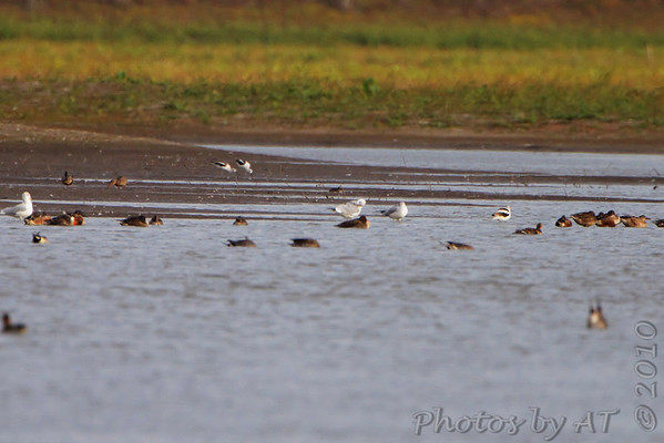 2010-10-22 Riverlands Migratory Bird Sanctuary