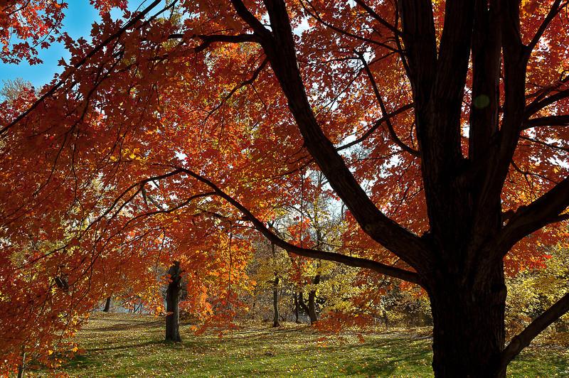 fall27.jpg