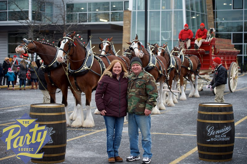 Clydesdale Portraits 45.jpg