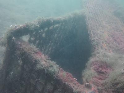 20110711 Dive, Gammelmark