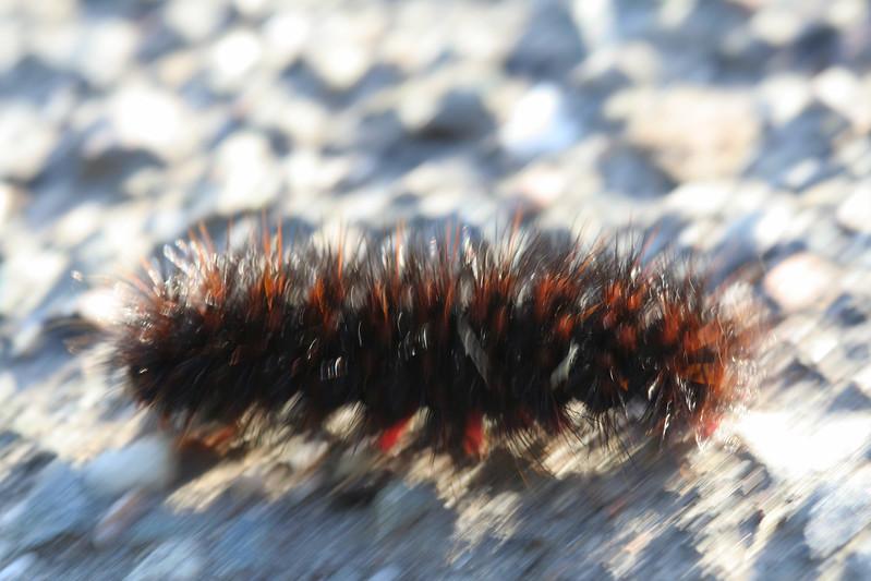 2069 Caterpillar blur.jpg