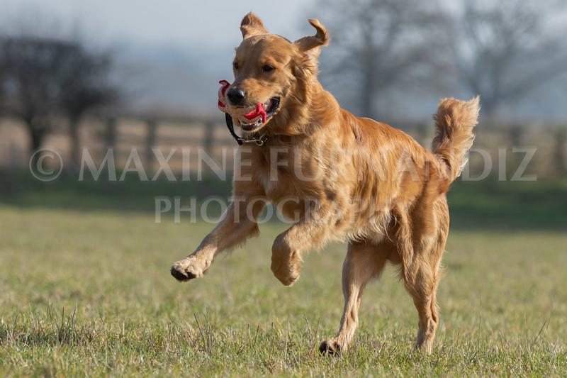 Dog Training Novice GD Feb2019-5899.jpg